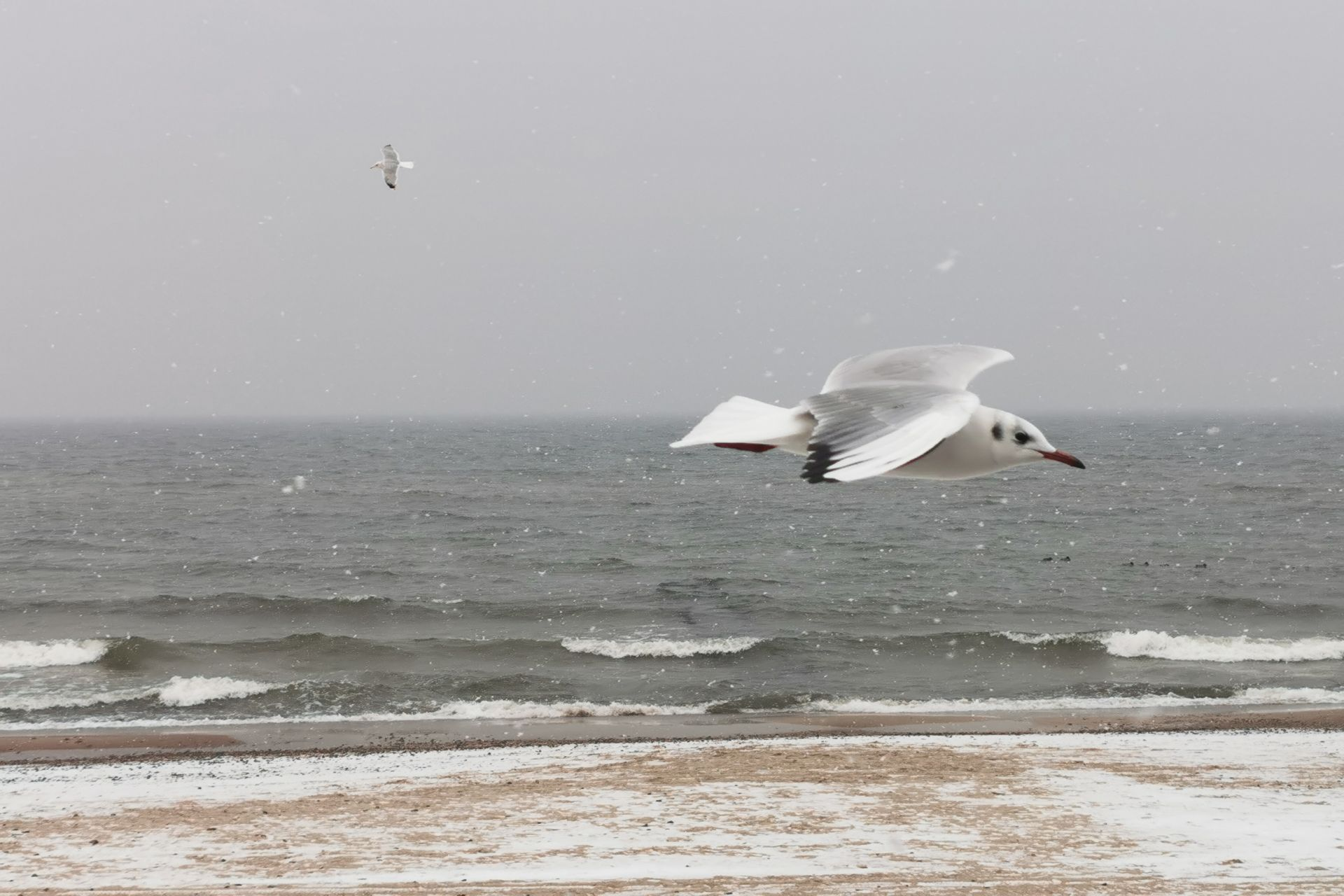 zimowy baltyk